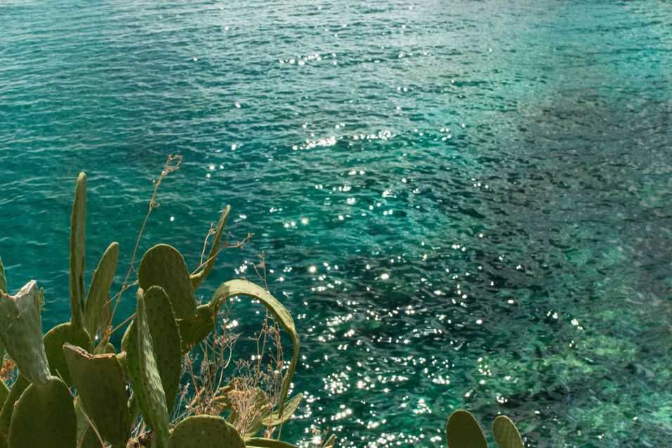 sea-and-cactus_olga-_pancenko_-5_terre